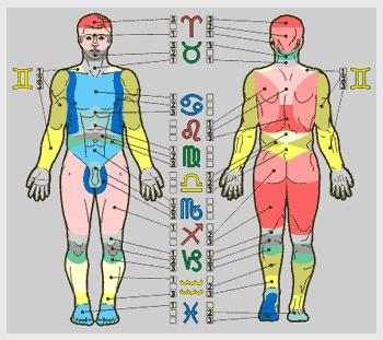 Знаки Зодиака. Характеристика. Обсуждение. Znaki-zodiaka-v-medicine-chastey-tel-cheloveka